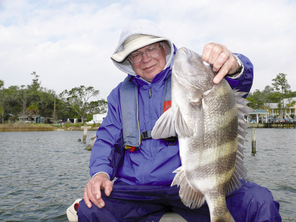 sheepshead fishing rig best bait for sheepshead fish where to catch sheepshead fish