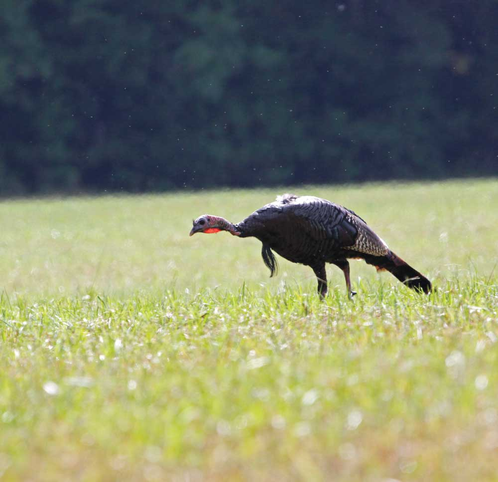 alabama turkey season 2020
