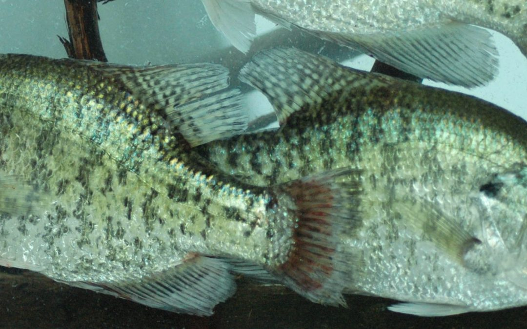 Crappie Fishing Secrets for the Fall