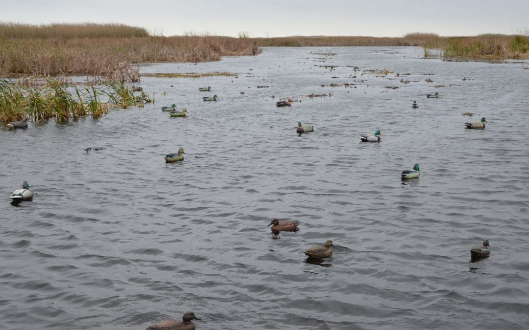 December Delta Ducks