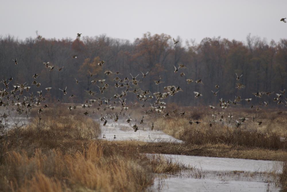 Waterfowl Hunting – A Hidden Gem in Alabama | Great Days