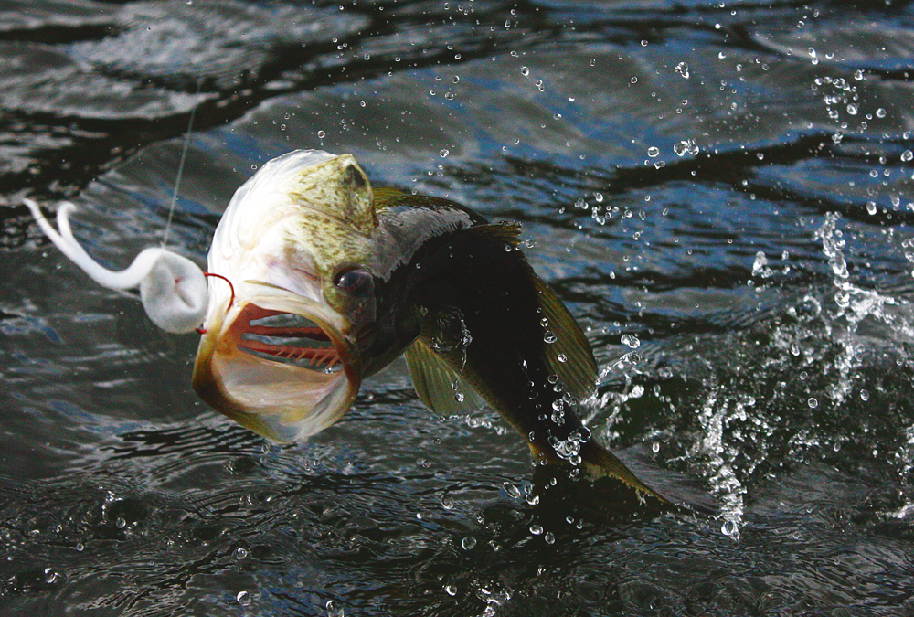 How to Catch Big Bass in Ponds