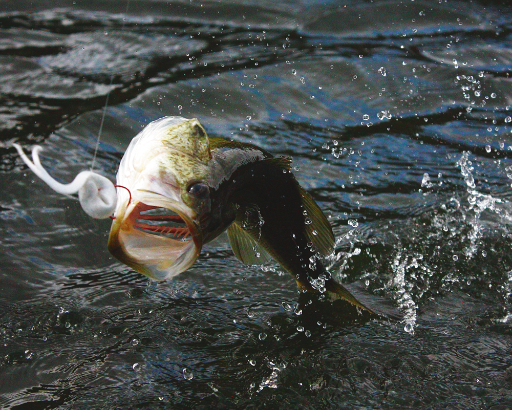 When bed fishing for bass use bright soft plastics.