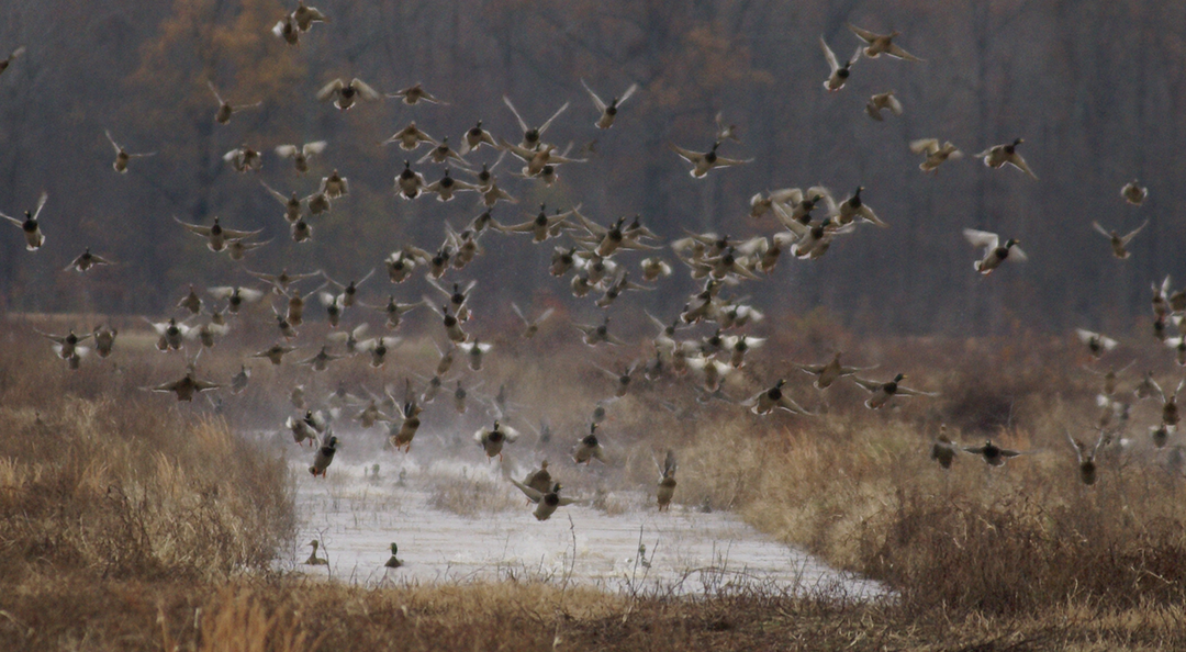 Waterfowl Hunting – A Hidden Gem in Alabama