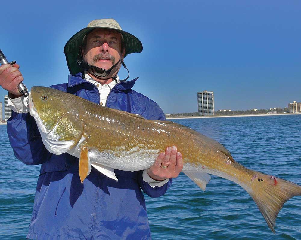 A big bull redfish caught off the beach.