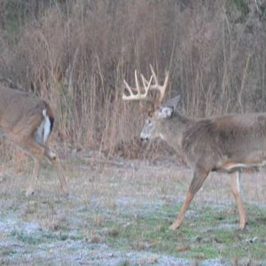 Three Ways to Produce Healthier Deer and Better Bucks