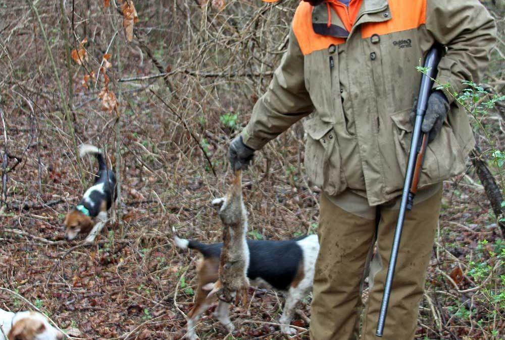 Hunting Dog vs Running Rabbit