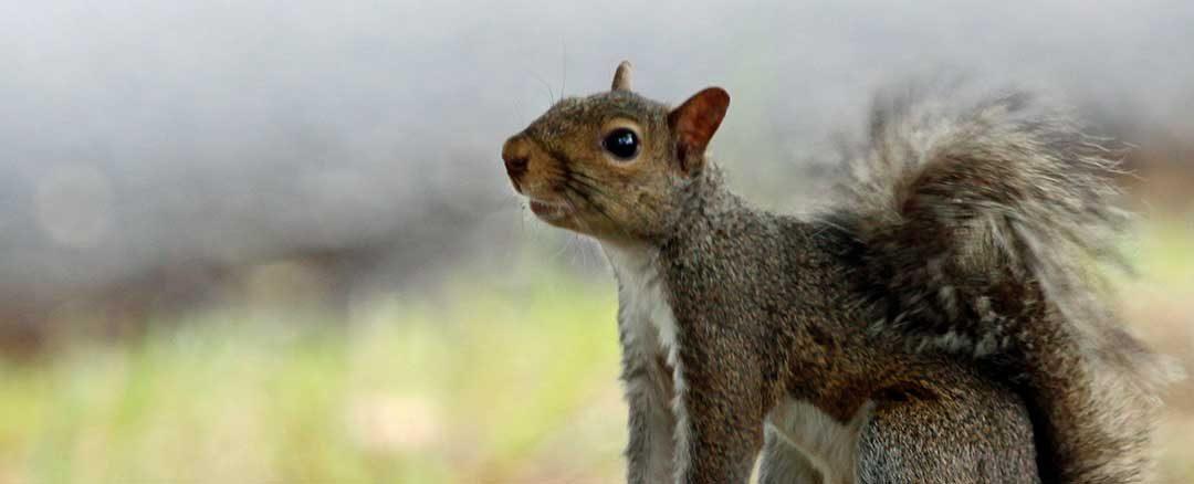 Late Season Squirrels
