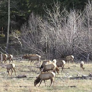 So, You Want to be an Elk Hunter? Part II