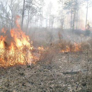 Turkey Hunting After Controlled Burns