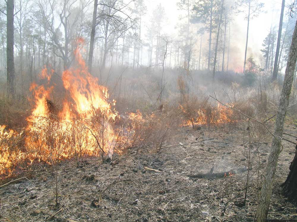 In the process of controlled burns.