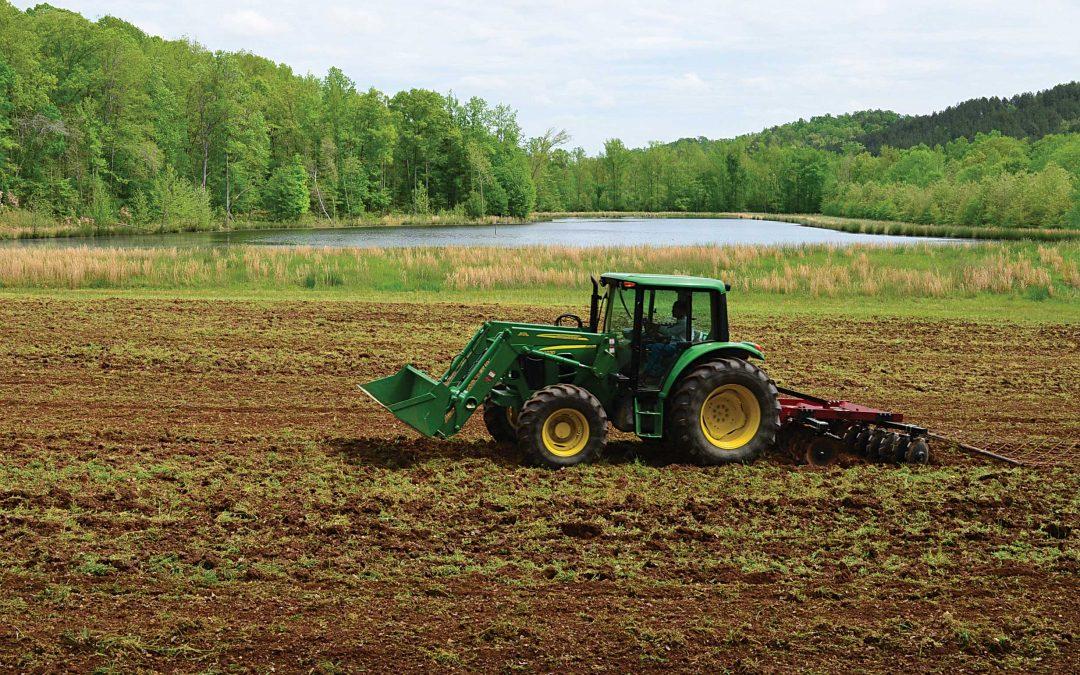 What to Expect: Establishing Perennials