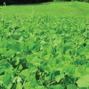 Jumpstart Your Food Plot