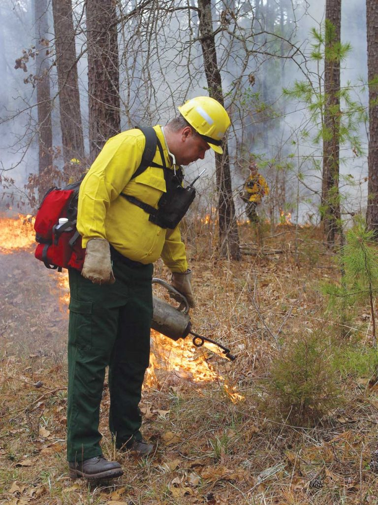 Controlled burns can be turkey goldmines.