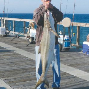 Cobia Fishing Off the Pier