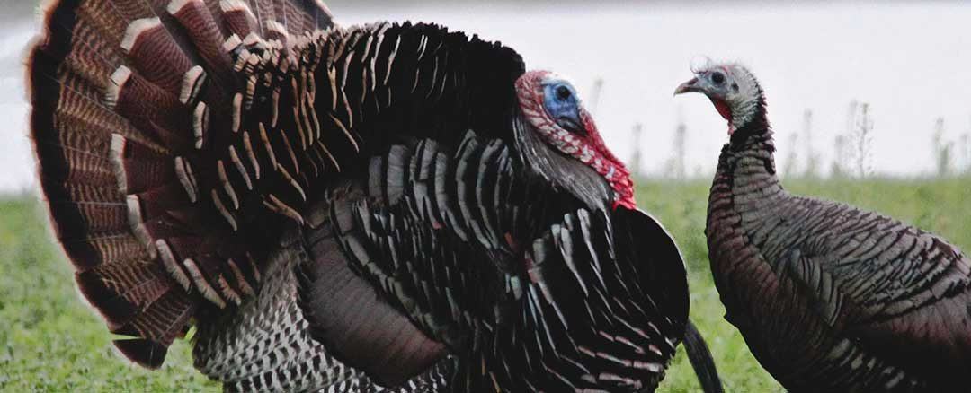 What Kind of Turkey Hunter Are You?