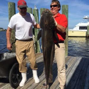 Big Cobia Fishing Close to the Coast
