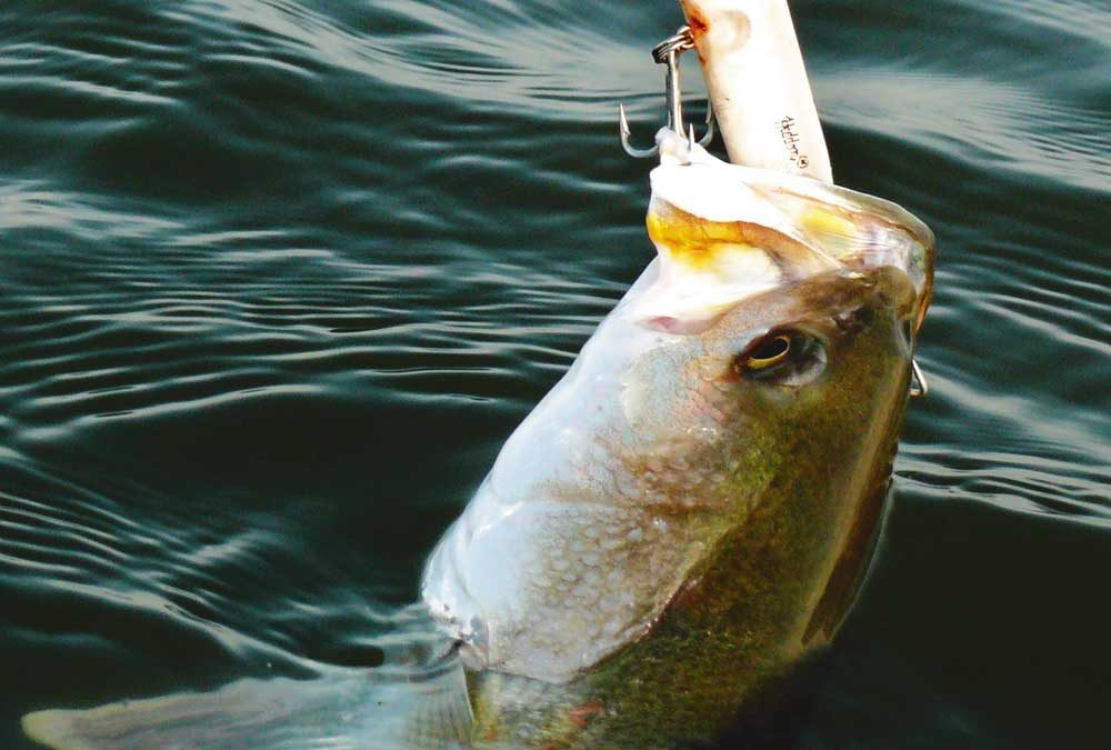 Topwater Fishing For Speckled Trout