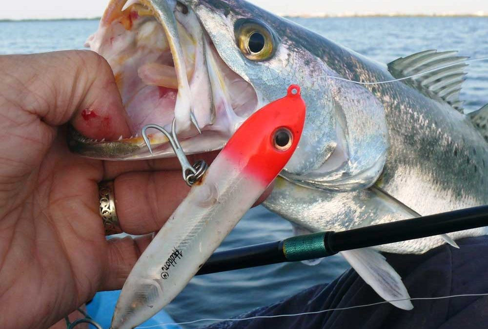 Top-water for Speckled Trout: How it's Done in Alabama