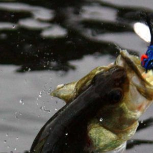 Fall Bass Fishing Tips for the Tensaw River Delta