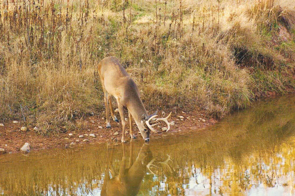 4 Tips for Land Improvements this Hunting Season