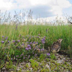 Alabama's Native Warm Season Grass