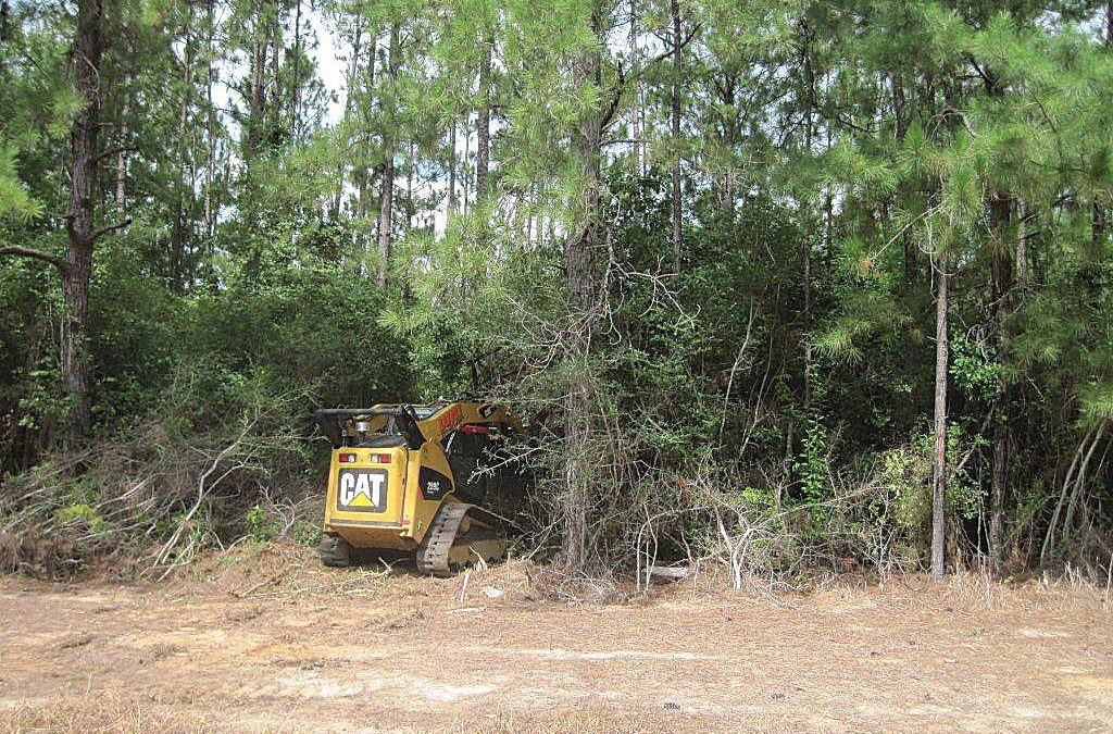 Brush Cutting for Wildlife Management