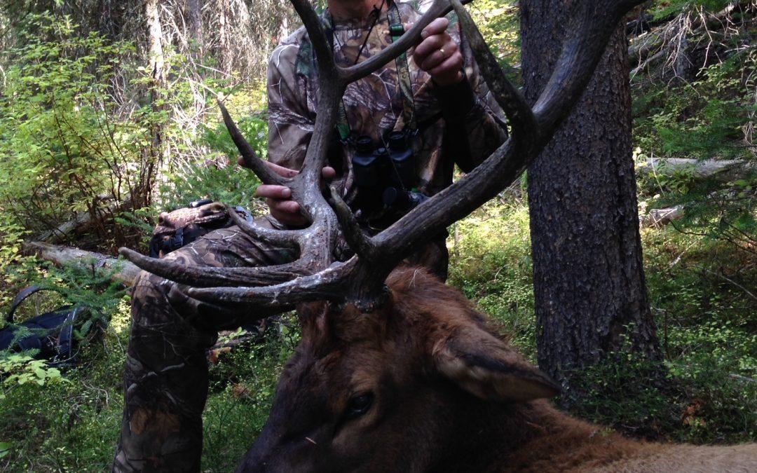 Bullfight: The Best Day to Kill a Bull