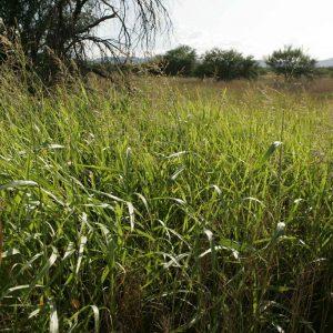 How to Remove Invasive Plants