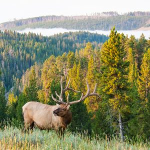Top 5 Archery Elk Hunting Myths