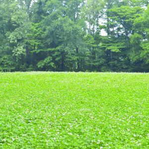 Building Food Plots with Integrity