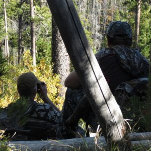 Elk: To call or not to call