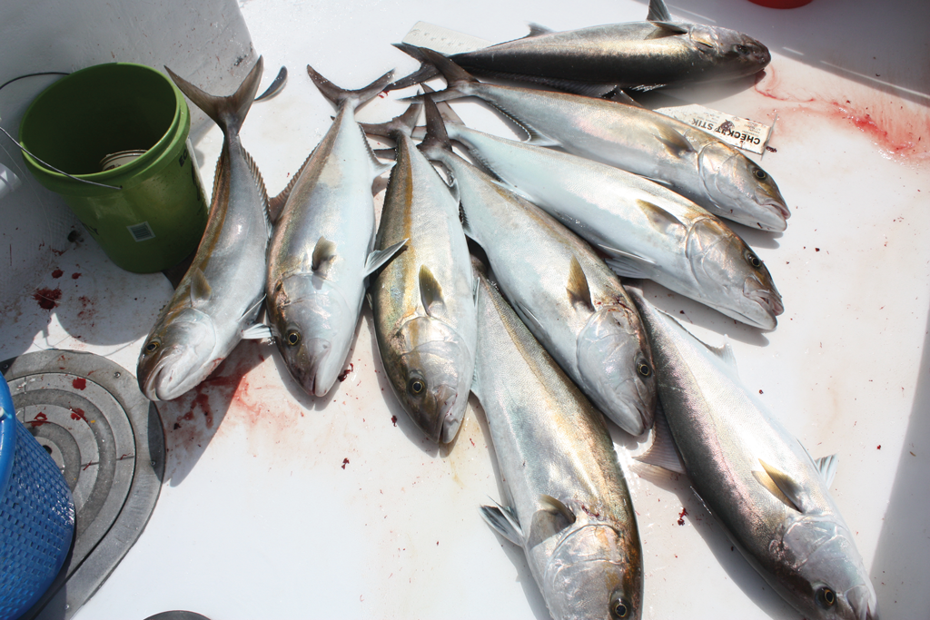 Overnight Fishing Trips on the Gulf   Great Days Outdoors