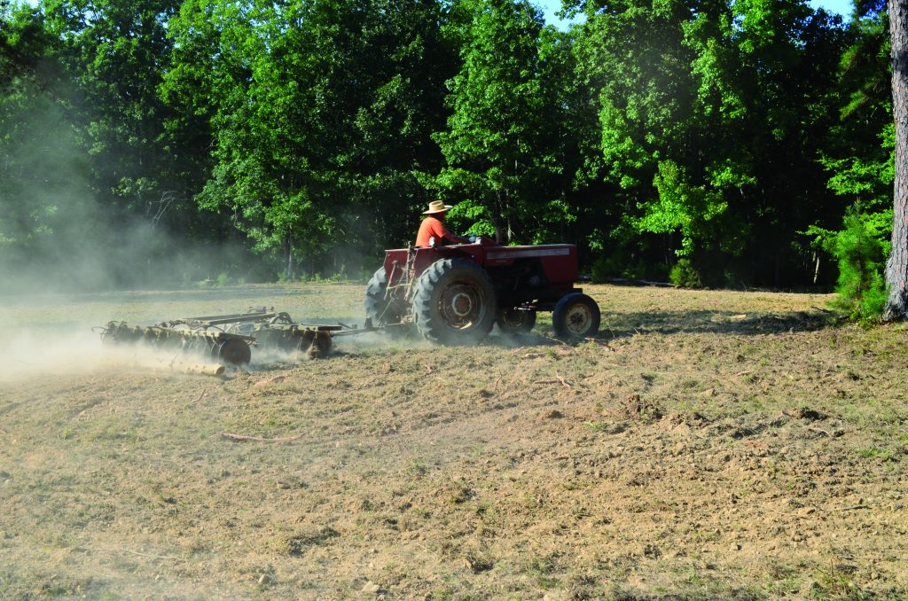 Planting food plots for deer late can be effective for attracting deer and also provide cold season nutrition.