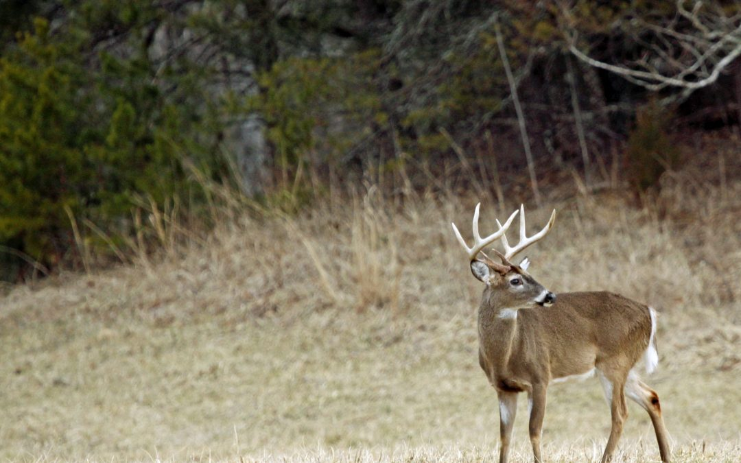 The Top Locations To Place A Treestand