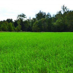 Planting Food Plots for Deer During Dry Months