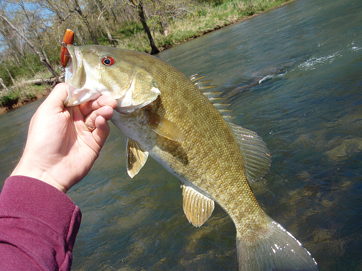 October Smallmouth Bass Fishing North Alabama Great Days Outdoors