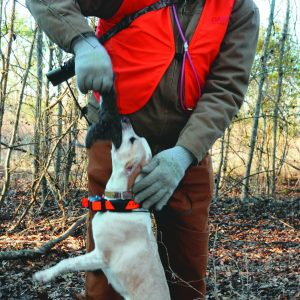 Tips for Training Your Squirrel Dog