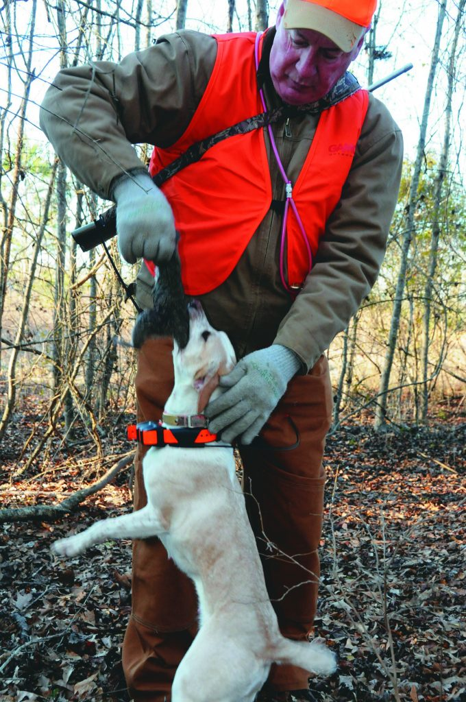 Williams hunts with his dogs six days a week in the Mark Twain National Forest where he lives in Donithan, Mo., and has perfected the art of training a pup. Check out his tips for raising and training squirrel dogs.