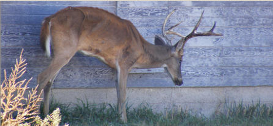 Arrests Made! Preventing CWD in Alabama