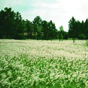 Ways to Control Invasive Weeds in Wildlife