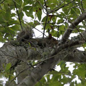 Secret Squirrel Hunting Spots