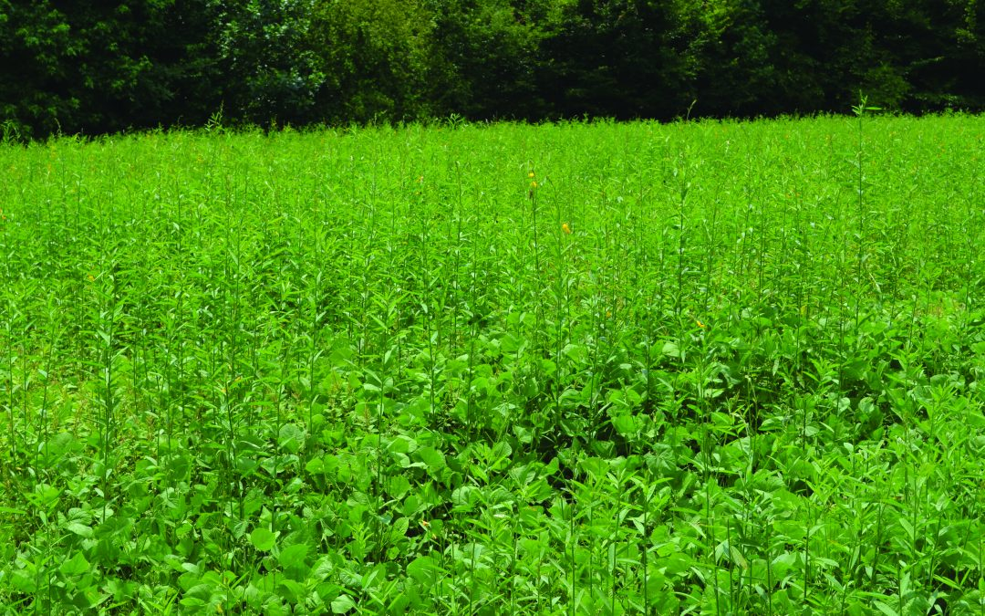 The Secret Value of Food Plot Crop Rotation