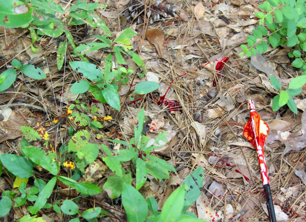 Don't restrict yourself to looking for blood on the ground when tracking a shot deer.
