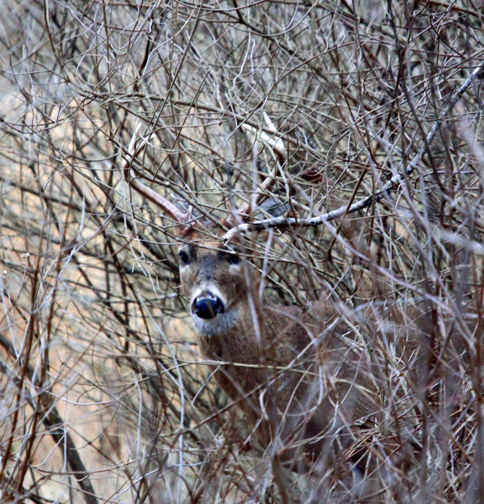 Gathering a few facts before tracking a shot deer can help in the recovery of a downed animal.