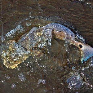 Fishing the Mobile-Tensaw Delta For Specks & Reds