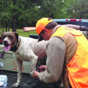 Ways to Keep Your Hunting Dogs Safe in the Winter
