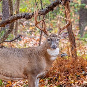Join Us for Hunting Works for Alabama