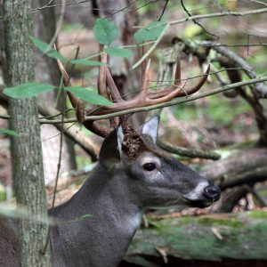 Tips and Methods for Hunting Clear Cut Land