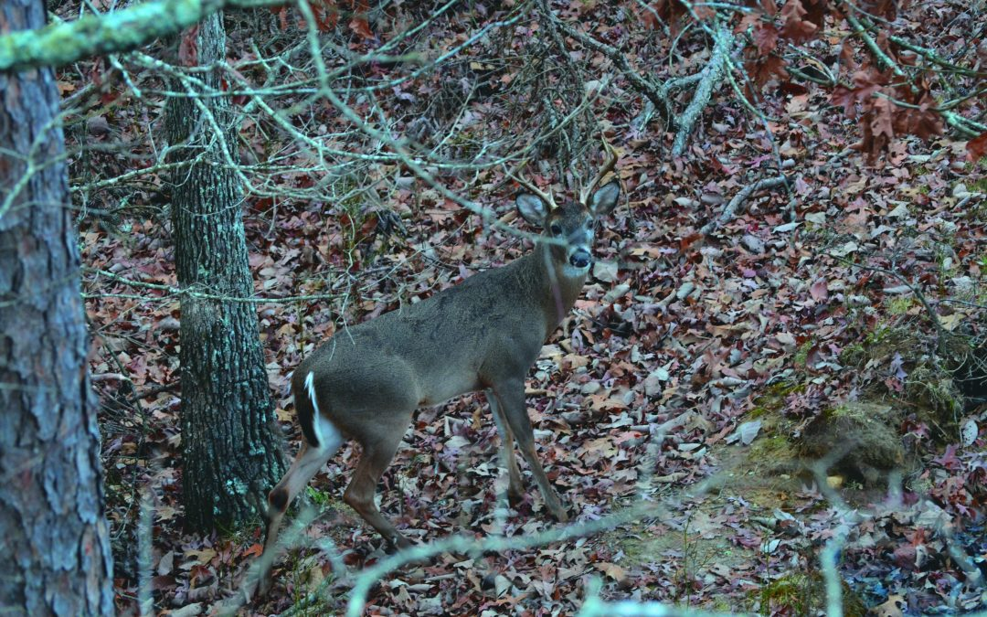Quick Tips for Tree Stand Placement
